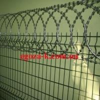 Єгоза Козачка плоска на парканні панелі